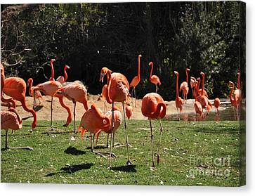 Canvas Print featuring the photograph Flamingos by John Black