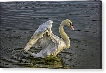 Flap Those Wings Canvas Print