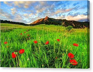 Flatiron Poppies Canvas Print by Scott Mahon