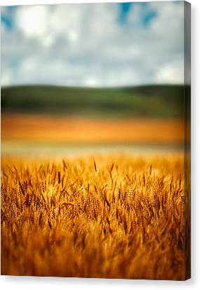 Flaxen Layers Canvas Print