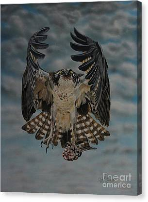 Fleck The Osprey  Canvas Print