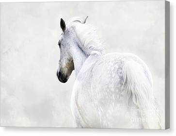 Fleeing Grey Horse Canvas Print by Ethiriel  Photography