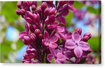 Fleur De Lilac Canvas Print