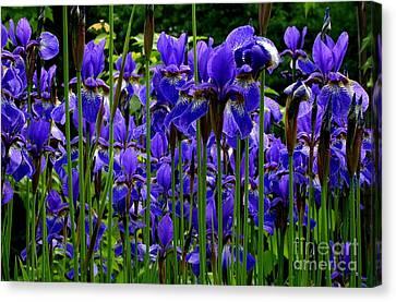 Fleur De Lys Canvas Print