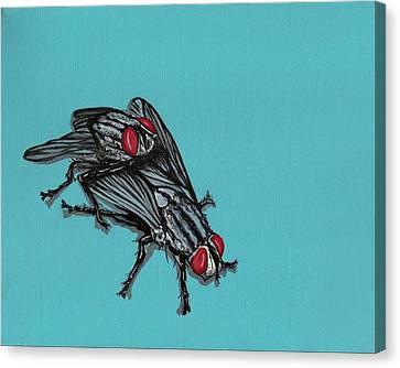Flies Canvas Print by Jude Labuszewski