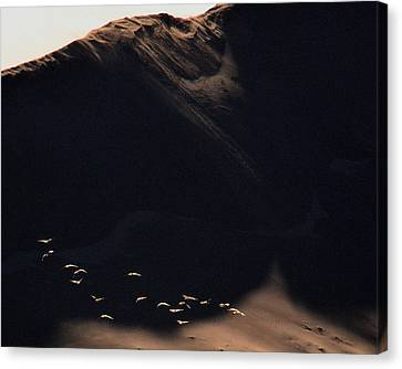 Canvas Print featuring the photograph Flight At Dawn by Al Swasey