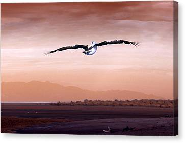 Flight Canvas Print by Holly Kempe