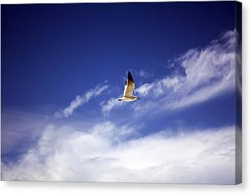 Flight In The Blue Sky Canvas Print by Kristen Vota