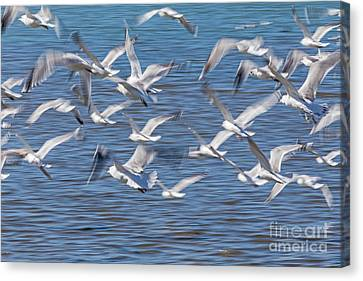 Flight Canvas Print by Kate Brown
