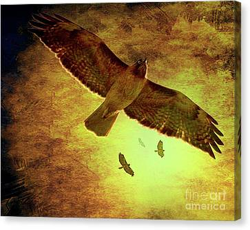 Flight Of The Golden Hawks . 7d5066 Canvas Print by Wingsdomain Art and Photography