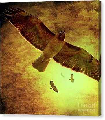 Bif Canvas Print - Flight Of The Golden Hawks . Square . 7d5066 by Wingsdomain Art and Photography