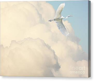 Flight Of The Great White Egret Canvas Print by Wingsdomain Art and Photography