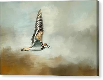 Flight Of The Killdeer Canvas Print by Jai Johnson