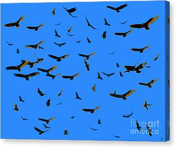 Flight Of The Vultures Canvas Print by David Lee Thompson