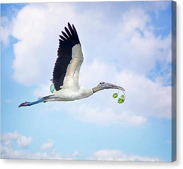 Flight Of The Wood Stork Canvas Print by Mark Andrew Thomas