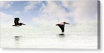 Flight Of Thepelicans Canvas Print by Marty Koch