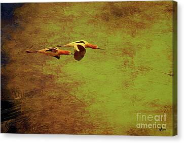 Flight Of Two American Avocets . Texture . 40d5412 Canvas Print by Wingsdomain Art and Photography