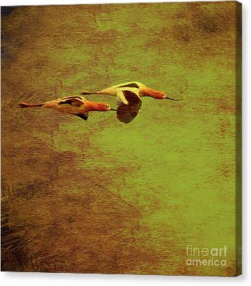 Bif Canvas Print - Flight Of Two American Avocets . Texture . Square . 40d5412 by Wingsdomain Art and Photography