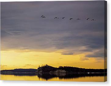 Matanuska Canvas Print - Flight Over Goose Bay by Ron Day