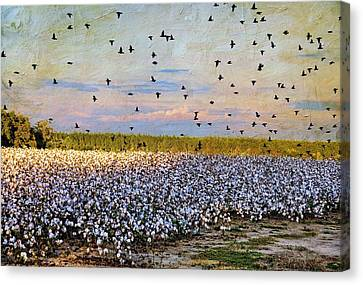 Canvas Print featuring the photograph Flight Over The Cotton by Jan Amiss Photography