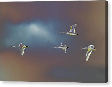 Flight Canvas Print by Richard Patmore