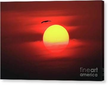Flight To The Sun Canvas Print