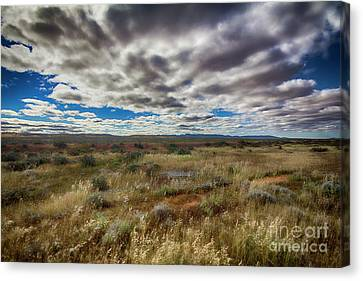 Canvas Print featuring the photograph Flinders Ranges Fields  by Douglas Barnard