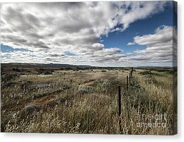 Canvas Print featuring the photograph Flinders Ranges Fields V2 by Douglas Barnard