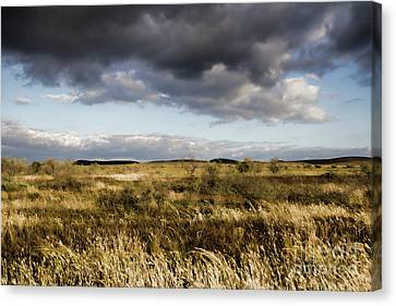Canvas Print featuring the photograph Flinders Ranges Fields V3 by Douglas Barnard