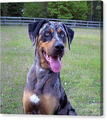Flip The Catahoula Leopard Dog Canvas Print by Lorrie McCarthy