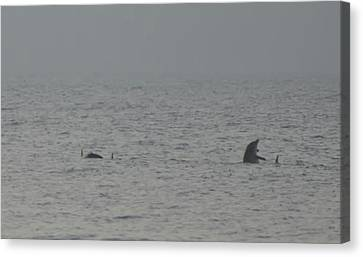 Flipper Canvas Print by Bill Cannon