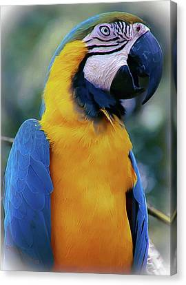 Flirtacious Macaw Canvas Print by DigiArt Diaries by Vicky B Fuller