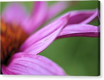 Canvas Print featuring the photograph Float Away by Christi Kraft