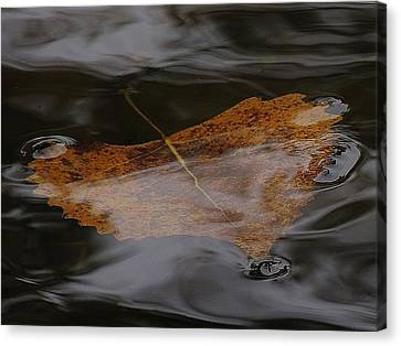 Float Away Canvas Print by Todd Sherlock