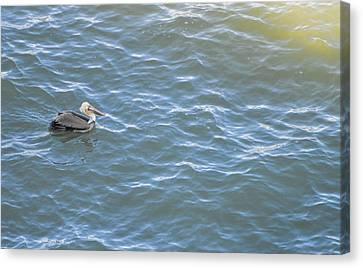 Floating Along Canvas Print by Miranda Strapason