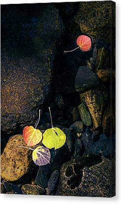 Canvas Print featuring the photograph Floating Aspen Leaves by Alexander Kunz