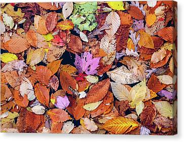 Floating Autumn Leaves On A Lake Canvas Print by Morris Finkelstein