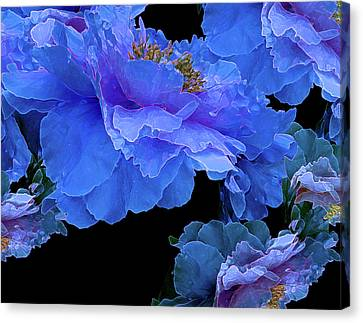 Floating Bouquet 10 Canvas Print by Lynda Lehmann