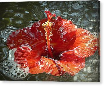 Floating Hibiscus Canvas Print