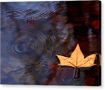Floating Leaf Canvas Print