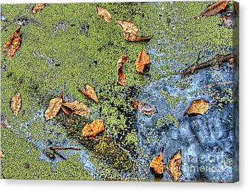 Floating Leaves  Canvas Print by Larry Braun