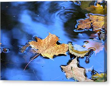 Canvas Print featuring the photograph Floating On The Reflected Sky by Doris Potter