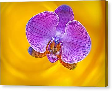 Golden Pink Orchid Canvas Print - Floating Orchid by Susan Candelario