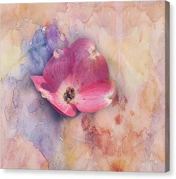 Floating Pink Bloom Canvas Print by Toni Hopper