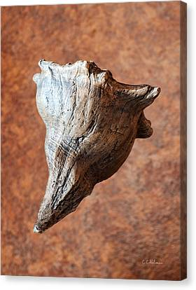 Floating Shell Canvas Print by Christopher Holmes