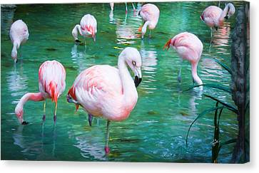 Flock Of Flamingos Canvas Print