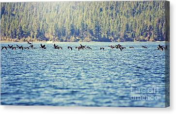 Flock Of Geese Canvas Print by Janie Johnson