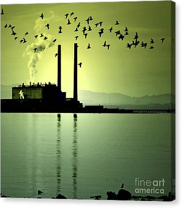 Canvas Print featuring the photograph Flock Of Gulls by Craig B