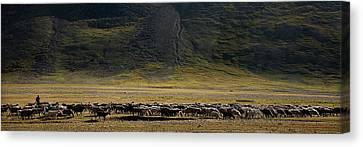 Flock Of Sheep Canvas Print by Konstantin Dikovsky