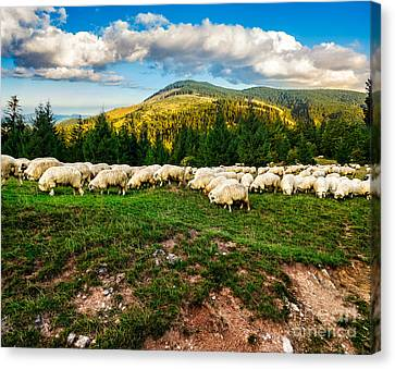 Flock Of Sheep On The Meadow Near  Forest Canvas Print